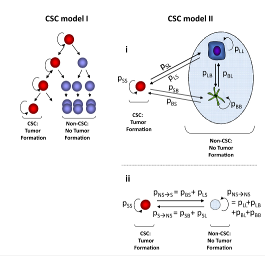 Stochastic State Transitions Give Rise to Phenotypic Equilibrium in Populations of Cancer Cells